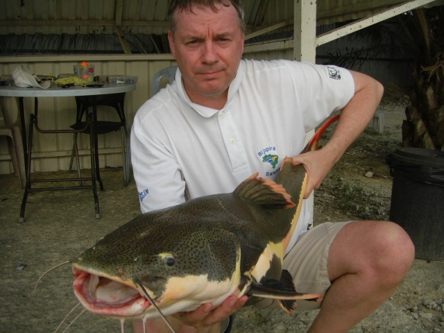 (6) Amazon Redtail_fish no.4 (12.08.16)