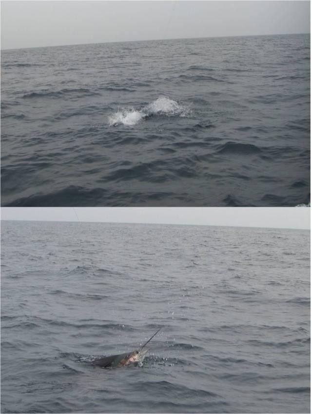Sailfish #2 at surface (21.08.16)