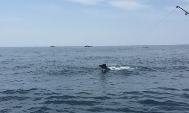 23-sailfish-no-2-18-09-16-c