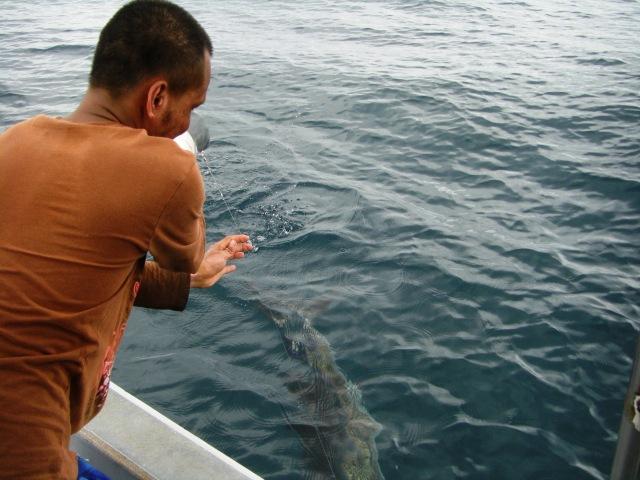 7-sailfish-no-2-17-09-16-ed