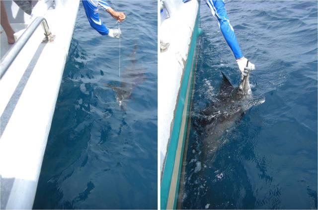 sailfish-no-2-18-09-16
