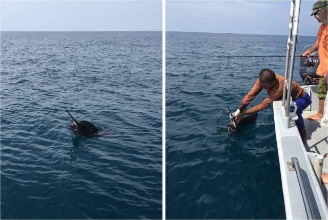 sailfish-no-3-17-09-16