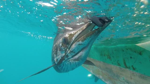 f2-7-sailfish-no-2-screenshot-15-10-16