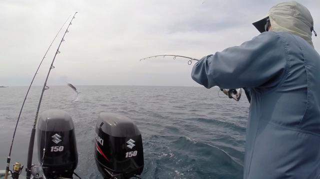 f3-3-sailfish-no-3-screenshot-15-10-16